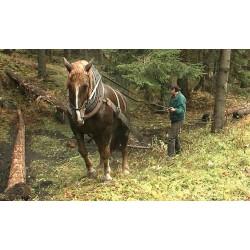 ČR - zvířata - příroda - kůň - les - dřevo - těžba dřeva