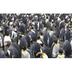 Antarktida - tučňáci - tuleni - oceán