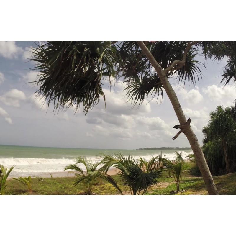 Sri Lanka - Indian Ocean - beach - sand - palm - wave - dog