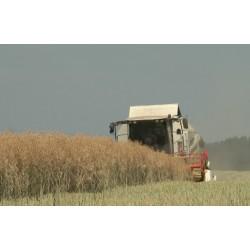ČR - zemědělství - kombajn - sklizeň - doprava