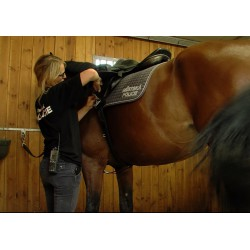 CR - animals - Prague - horses - city police - brushing - saddle