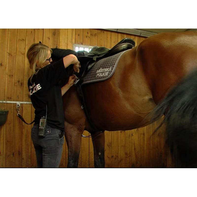 CR - animals - Prague - horses - city police - brushing - saddle