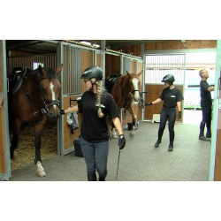 CR - animals - Prague - horses - city police - training - riding