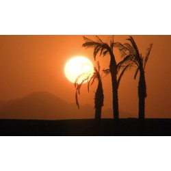 Africa - sunset - sun - palm - time-lapse - 100x faster