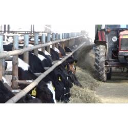 ČR - zemědělství - zvířata - krmení - kráva - seno - sláma - podestýlka 2