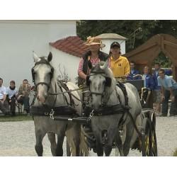ČR - zvířata - koně - kočár - jízda