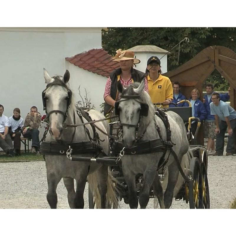 CR - animals - horses - carriage - ride