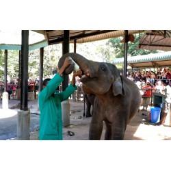Srí Lanka - zvířata - cestování - Pinnawala - slon - sirotčinec - krmení