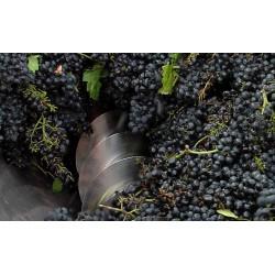 ČR - obchod - Morava - víno - vinná réva - zpracování vína - 2 - vinařství