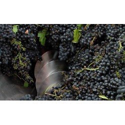CR - trade - Moravia - wine - grapevine - wine processing - 2 - wine-making