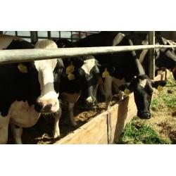 ČR - zvířata - zemědělství - kráva - chlévy - pastvina - kravín
