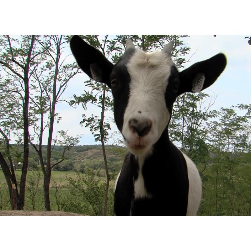 CR - animals - Velké Pavlovice - hen - sheep - goat - shed - zoo - henhouse - farm