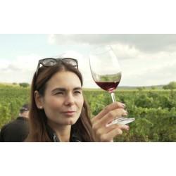 ČR - příroda - vinohrad - vinná réva - víno - vinobraní - sklenice - alkohol - degustace