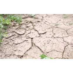 CR - agriculture - nature - weather - drought - field - soil - water