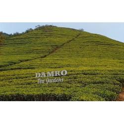 Sri Lanka - nature - tea - tea plant - plantation - growing - fermentation - production - cup - 2K