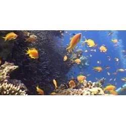 Egejské moře - potápeči - podmořský život