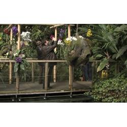 ČR - Praha - skleník - FataMorgana - orchideje
