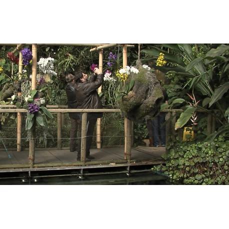 Orchideje praha