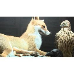 ČR - příroda - zvířata - vycpaniny