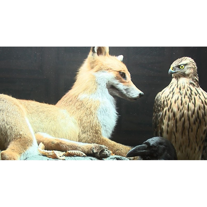 CR - nature - animals - stuffed animals