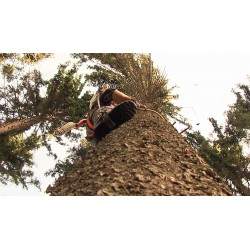 CR - Krkonoše Mountain - forestry - climbing - tree