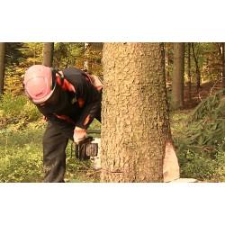 ČR - Krkonoše - lesnictví - dřevorubec - motorová pila - kácení - strom
