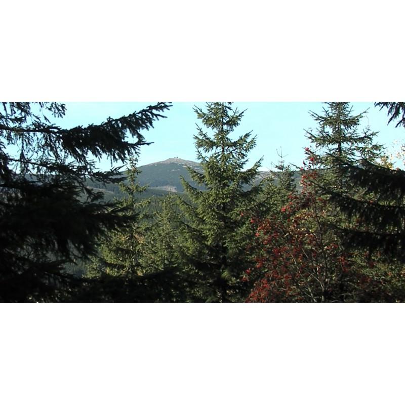 CR - krkonoše mountains - nature - forest - 2