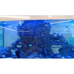 ČR - ryby - akvarium - 2