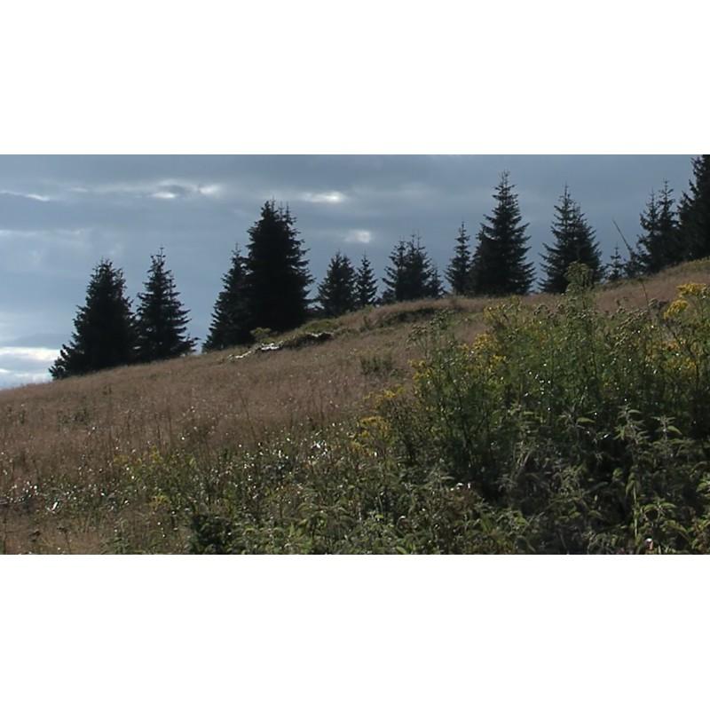 CR - nature - forest - sky - time-lapse - 2 - original length
