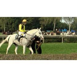 ČR - Pardubice - Velká Pardubická - dostihy - koně