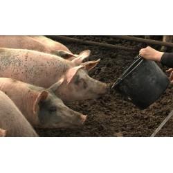 ČR - zemědělství - zvířata - prasata - krmení