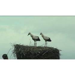 ČR - zvířata - labutě - kachny - čápi