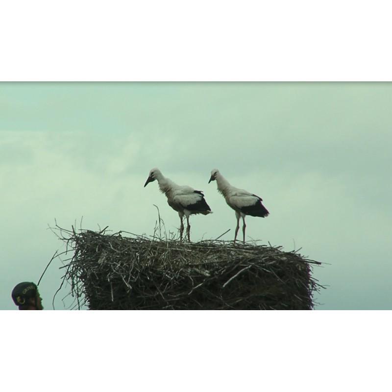 cr - animals - swan - duck - stork